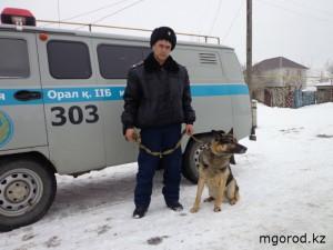 Новости Уральск - Уральск. Пёс-полицейский помог раскрыть двойное убийство mgorod.kz (2)