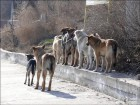 dogs_www.gorodkiev.com.ua