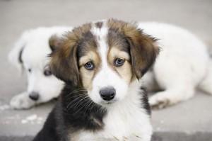 Актобе. Мужчину оштрафовали за отстрел собаки dog_www.i.exifer.com.ua