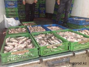 fish2_www.mgorod.kz
