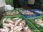 fish3_www.mgorod.kz