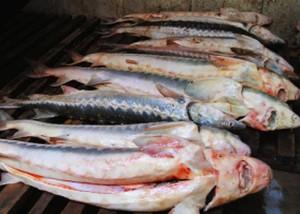 У жителя Атырау изъяли 60 кг. красной рыбы Фото с сайта www.aktau-site.ru