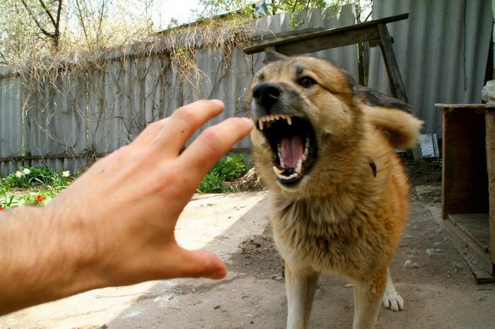 Более 300 человек пострадали от укусов животных в ЗКО Иллюстративное фото с сайта sobaka_chelovek-volk-kino.ru