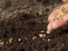 Новости - Общая площадь весеннего сева составила 18,6 млн га 13