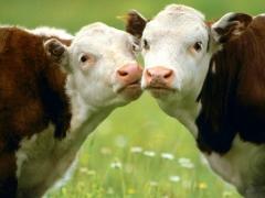 Нигматулин ставит под вопрос развитие экспорта животноводческой отрасли Казахстана фото с сайта agroacadem.ru