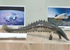 В Аральске открылся музей истории рыболовства Фото с сайта 24.kz