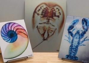 Американские врачи создают изображения с помощью рентгена Фото с сайта 24.kz