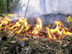 На западе Казахстана сохраняется высокая пожароопасность Фото с сайта crimea.ua