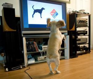 В США начинает работу круглосуточный телеканал для собак Фото felbert.livejournal.com