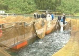Норвегия увеличивает объемы поставок рыбы в Казахстан Фото 24.kz