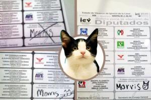Кот набрал на выборах в Мексике 600 голосов Изображение: animalpolitico.com