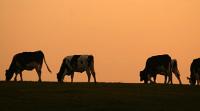 Москвичи оценили мясо из Казахстана на пять с плюсом Фото kursiv.kz