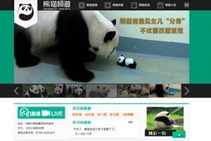 Новости - Китайцы запустят круглосуточное «реалити-шоу» о пандах Скриншот сайта ipanda.com