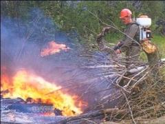 В Казахстане за полгода ущерб от лесных пожаров составил более 10 млн тенге фото с сайта booksite.ru