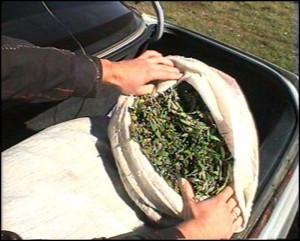 В Уральске задержали подростка за торговлю наркотиками Иллюстративное фото с сайта www.driversmedia.ru