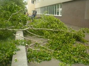 В Уральске на детей в садике рухнуло дерево Иллюстративное фото с сайта progorod11.ru