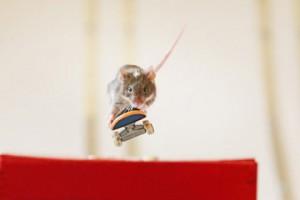 Новости - Австралиец научил мышей кататься на скейтбордах Фото: globalnews.ca