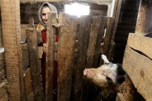 Лукашенко признал хамское отношение к свиноводам Фото: AFP