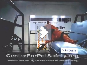 Subaru профинансирует тесты на безопасность собак Фото auto.lafa.kz