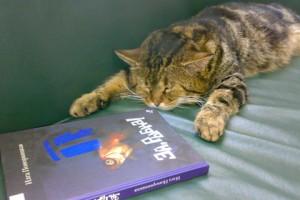 Кубанского кота устроили на работу в библиотеку Фото: yuga.ru