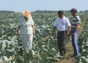 Фермеры Павлодарской области возлагают большие надежды на программу «Агробизнес - 2020» Фото 24.kz