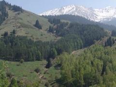 В Казахстане назначен глава Комитета лесного и охотничьего хозяйства фото с сайта fhc.kz