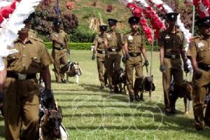 На Шри-Ланке состоялась массовая собачья свадьба Фото: nation.lk