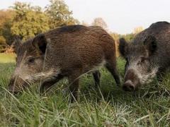 В Казахстане изменились правила регулирования численности животных фото с сайта pinsknews.by