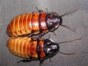 С китайской фермы сбежал миллион тараканов Фото teleport2001.ru