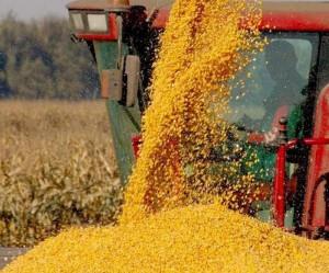 ЗКО. Директор ТОО «Аксай элеватор» подозревается в хищении зерна на 854 миллиона тенге aguwb iiv