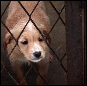 В Уральске приняли правила по содержанию кошек и собак x_63e6b517