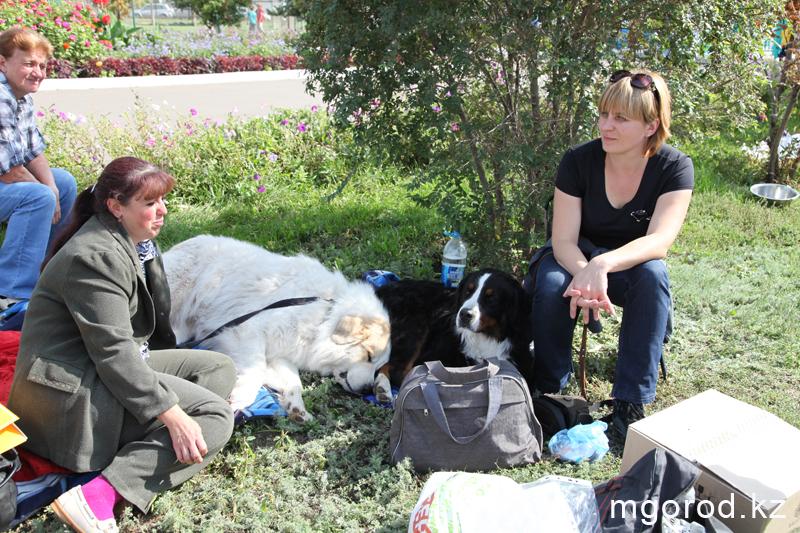 Уральск. 133 участника прибыли на выставку собак собака 14