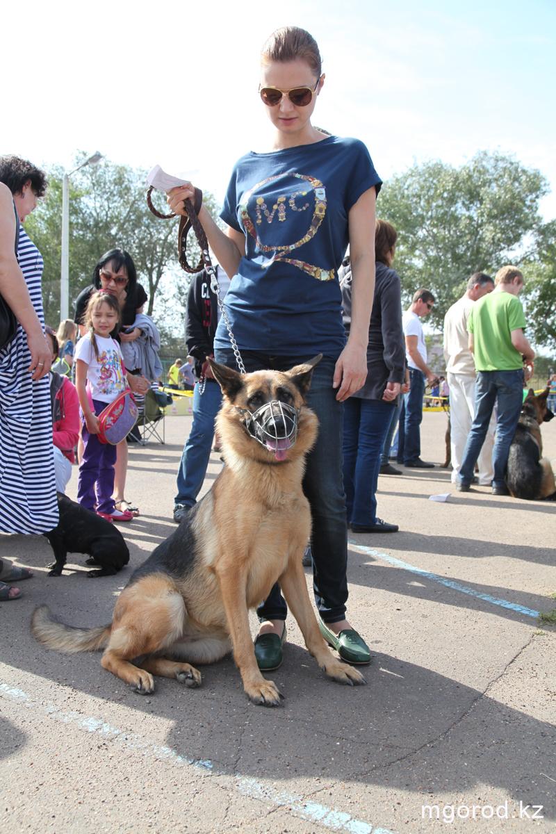 Уральск. 133 участника прибыли на выставку собак собака 9