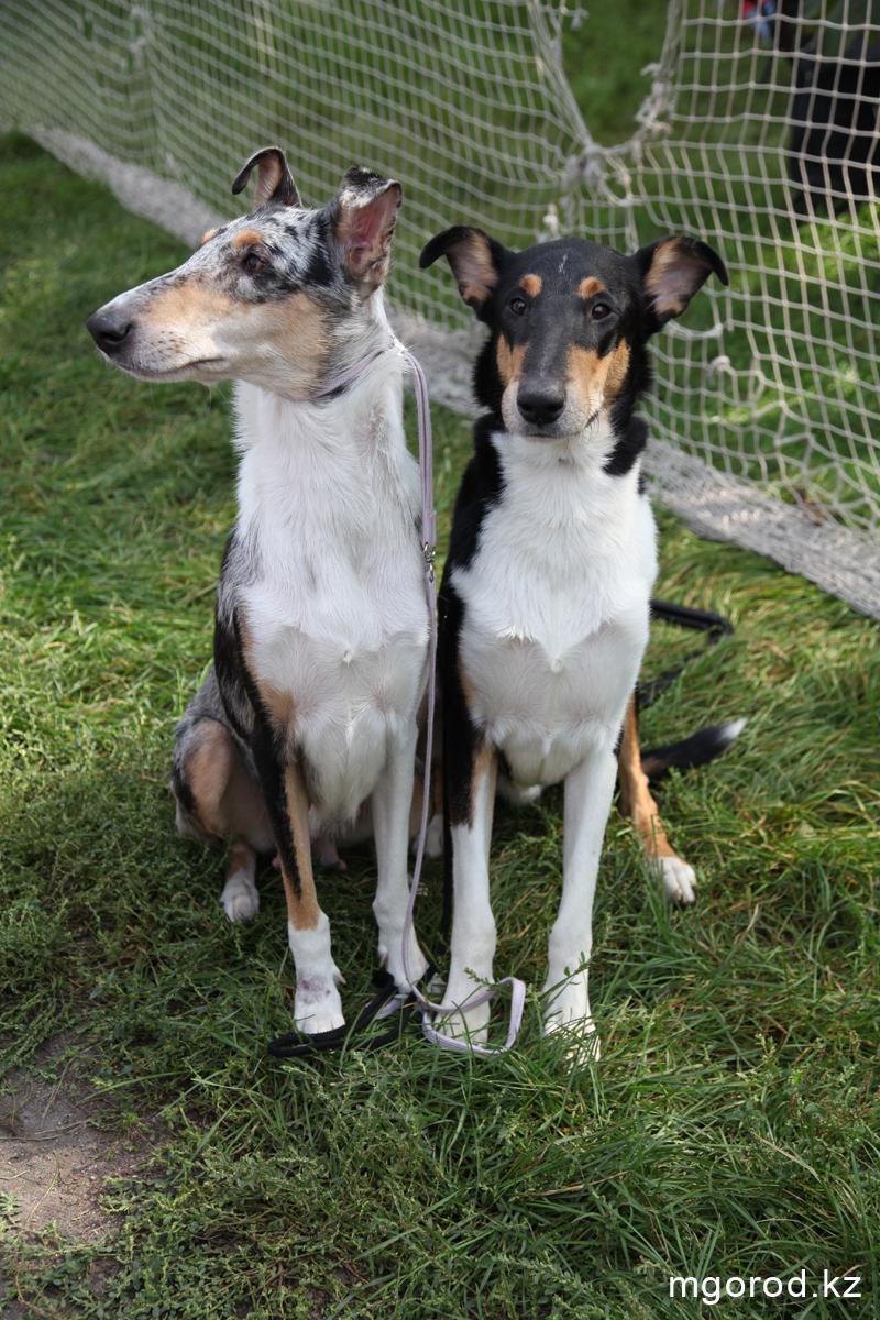 Уральск. 133 участника прибыли на выставку собак собаки 1