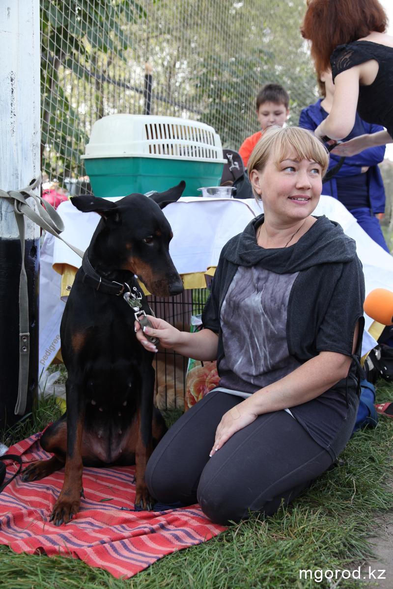 Уральск. 133 участника прибыли на выставку собак собаки 4