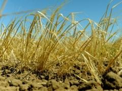 В этом году в Казахстане сельхозкультуры погибли на площади 120 тысяч гектаров фото с сайта ukrapk.com