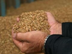 В Казахстане намолочено 12,6 миллиона тонн зерна фото с сайта rambler.ru