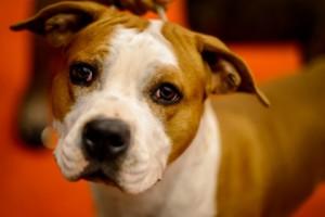 В Техасе собака случайно выстрелила в свою хозяйку Фото: Fabrice Coffrini / AFP