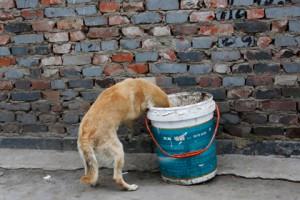 Румынский парламент проголосовал за уничтожение бродячих собак Фото: Kim Kyung-Hoon / Reuters