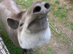 Новости - В алматинский зоопарк привезли экзотическое копытное Фото с сайта bigmir.net