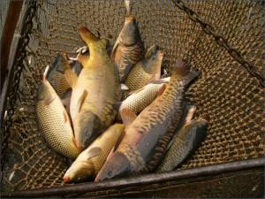 Более 600 кг рыбы изъяли из машины на трассе Атырау-Уральск fish.gov_.ru_