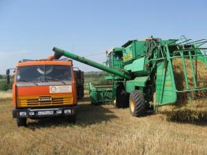 В Актюбинской области самая низкая урожайность зерна Иллюстративное фото с сайта rkamen.pnzreg.ru