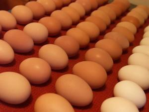 Десяток яиц за 2,5 тысячи тенге намеревался закупить детсад в Актобе Иллюстративное фото с сайта aleksandrovka-kir.all.biz