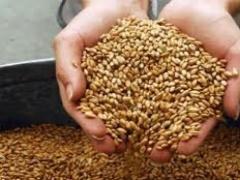 Новости - В Восточном Казахстане экспорт сельскохозяйственной продукции превысил итоги прошлого года фото с сайта moe.online.kz