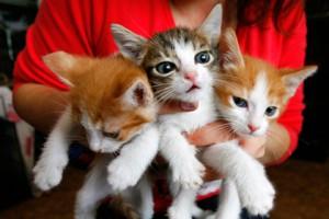 Киевлянин решил сдавать кошек напрокат Фото: Владимир Константинов / Reuters