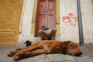 В Чили бездомных собак рекрутировали на городскую службу Бездомные собаки в Вальпараисо Фото: Eliseo Fernandez / Reuters