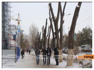Новости Уральск - Жесткую «обрезку» деревьев возле ТЦ в ЖКХ объясняют заботой о здоровье граждан der_diana2