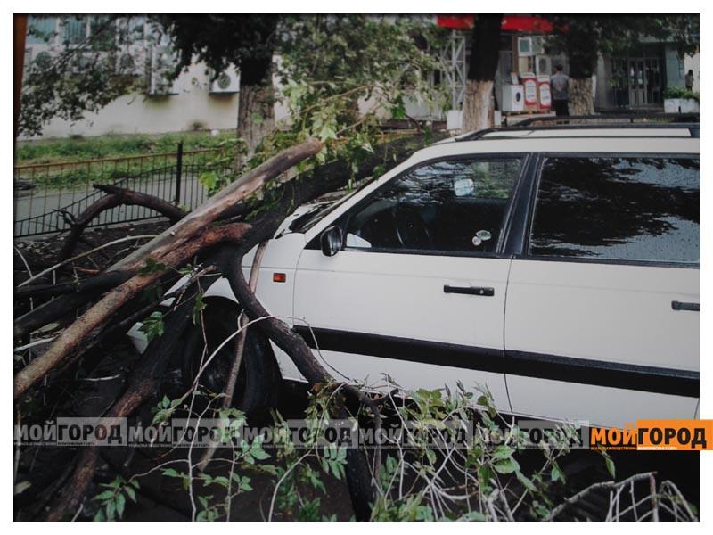 Новости Уральск - Жесткую «обрезку» деревьев возле ТЦ в ЖКХ объясняют заботой о здоровье граждан der_diana5