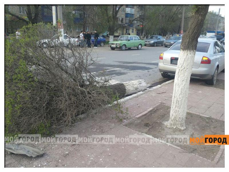 Новости Уральск - В Уральске автомобиль вырвал с корнем дерево avaria_derevo2