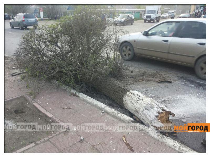 Новости Уральск - В Уральске автомобиль вырвал с корнем дерево avaria_derevo3